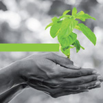 La Regione Friuli Venezia Giulia avvia il Green Public Procurement