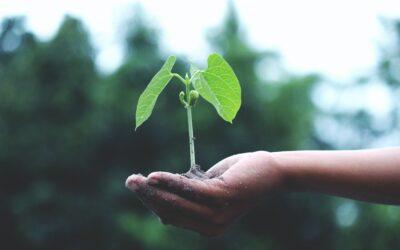 Sustainability Monitor Report, la sostenibilità delle imprese italiane