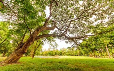 L'integrazione dei CAM per la riqualificazione del Parco Virgiliano